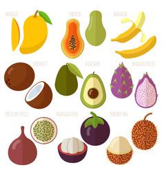 exotic tropical flat design fruits vector image