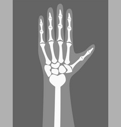 human arm under x-rays color vector image