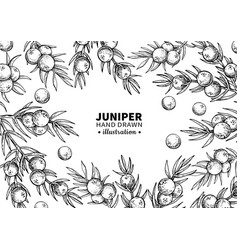 juniper drawing frame isolated vintage vector image