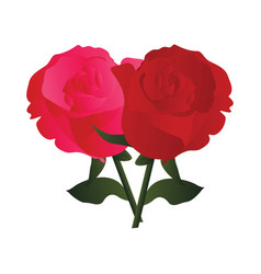 pink and red roses with green leafs on white vector image