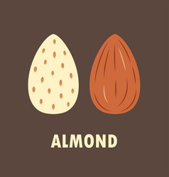almond on brown background vector image