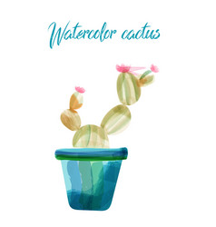 Cactus isolated on white background watercolor vector
