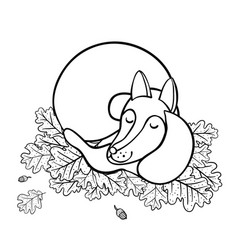 cute cartoon sleeping fox on oak leaves vector image