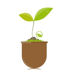 Flower pot with plants vector