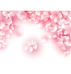 hanami sakura background vector image