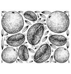 Hand drawn background of wood apple fruits vector