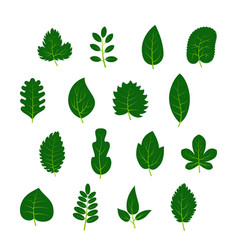 set of sixteen green leaves on white background vector image