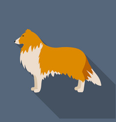 collie icon in flat style for web vector image