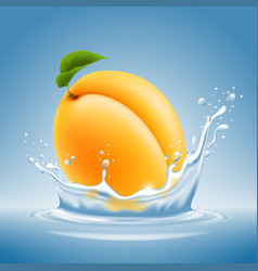 apricot fruit in water splash vector image