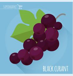 Black currant icon vector