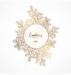 gold vintage with cranberry engraved vector image