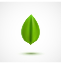 Realistic green leaf vector image