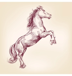 horse llustration vector image vector image