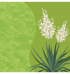 Background with flowers Yucca vector image
