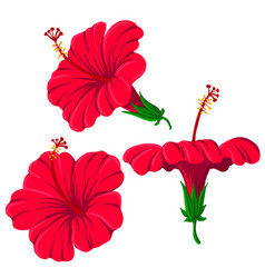 Drawing hibiscus flowers vector