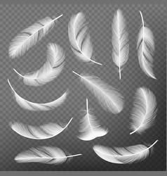 Feathers realistic plumage detailing lightness vector