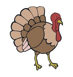 isolated turkey vector image