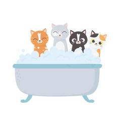 little cats in bathtub grooming pet isolated vector image