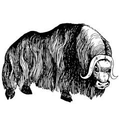 Musk ox vector image