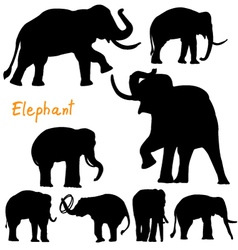 silhouette of elephant vector image