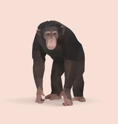 chimpanzee vector image vector image