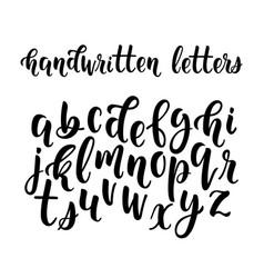 handwritten latin calligraphy brush script of vector image