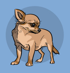 Little chihuahua dog vector
