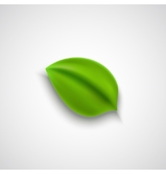 Realistic green leaf vector image vector image