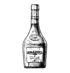bottles alcohol distilled beverage vector image
