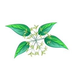 Bunch of Night Blooming Jasmine vector image