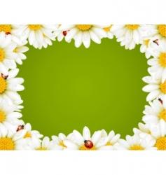 chamomile floral frame vector image vector image