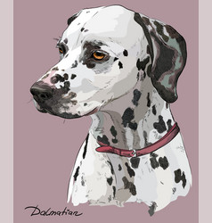 Coloful hand drawing portrait of dalmatian vector
