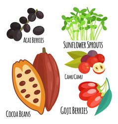 vegetarian superfood healthy vegetable eco food vector image