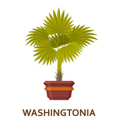 Washingtonia decorative houseplant in pot vector