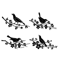 Birds on branches silhouettes vector image vector image