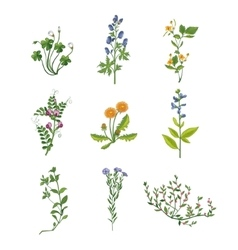 Wild Flowers Hand Drawn Collection Of Detailed vector image vector image