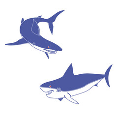 shark fish vector image