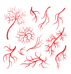 human eye veins red capillaries blood arteries vector image