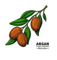 Argan drawing organic essential oil sketch vector