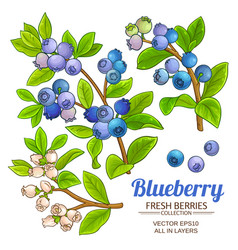 blueberry plant set on white background vector image