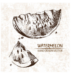 Digital detailed watermelon hand drawn vector