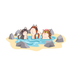 funny cats taking japanese hot spring bath outdoor vector image