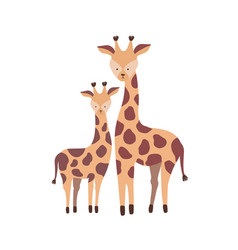 giraffe with calf isolated on white background vector image
