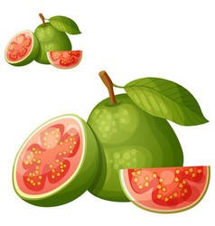 guava fruit cartoon icon isolated on white vector image