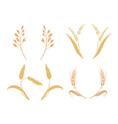 whole bread grains or field cereal nutritious rye vector image