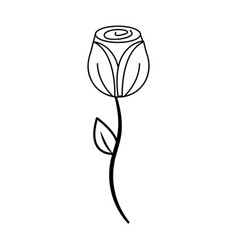 Figure beauty rose with petals plant vector