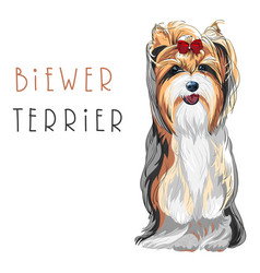 funny biewer yorkshire terrier dog sitting vector image vector image
