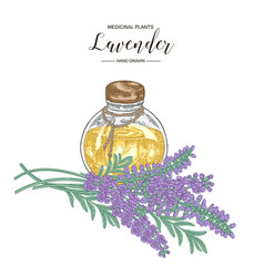 lavender flowers with glass bottle essential vector image