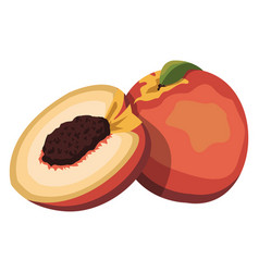 cartoon of a orange red and yellow nectarine vector image