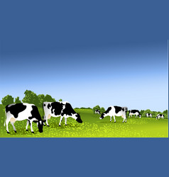 Cows in paddock vector